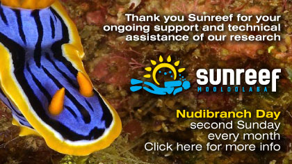 Sunreef Nudibranch Day